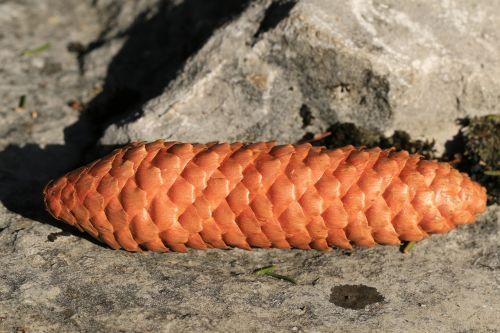 tap pine cones stone