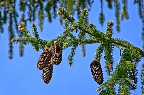 tap christmas tree branch