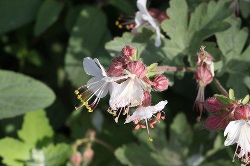tar  flowers  field
