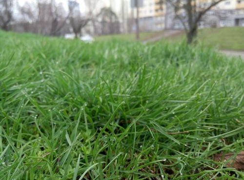 tara macro green
