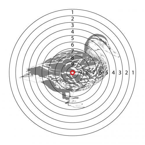 target duck shooting