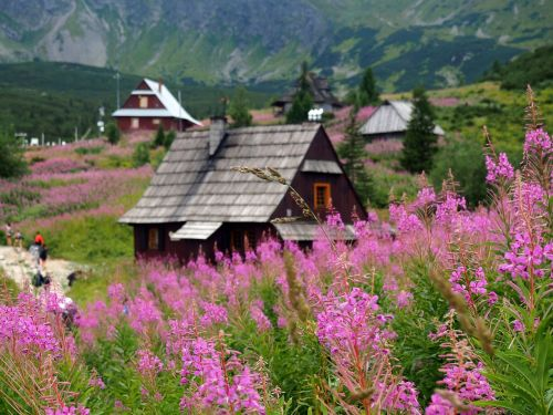 tatry hala gąsienicowa the national park