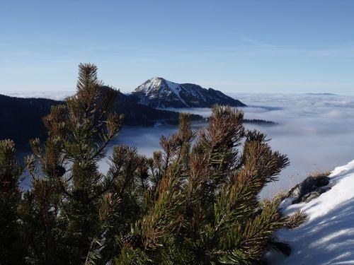 slovakija, tatras, kalnai, žiema, kosowka, medžiai, šlaitai, žiemos tatuiruotės kalnai