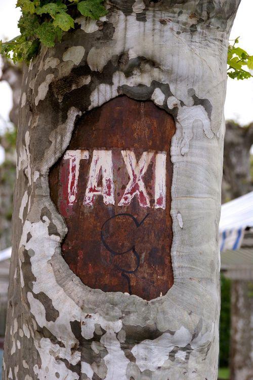 taxi tree city