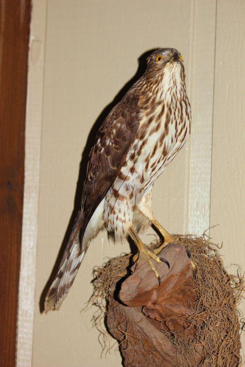 Taxidermy Bird 1