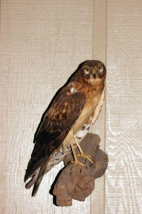 Taxidermy Bird 2