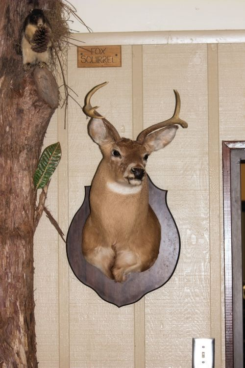 Free photos taxidermy search, download - needpix com