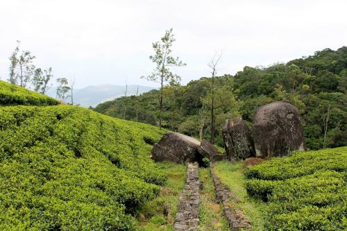 tea estate rock