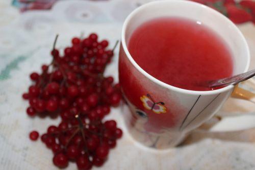 tea viburnum viburnum berries
