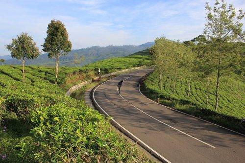 tea  tea plantation  skateboard