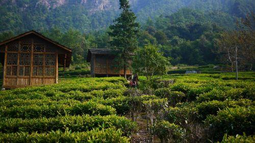 tea garden hillside tea house