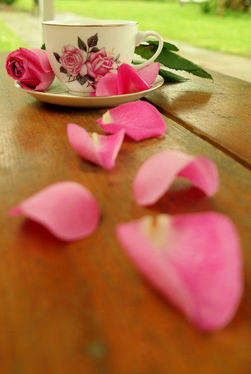 teacup rose blossom