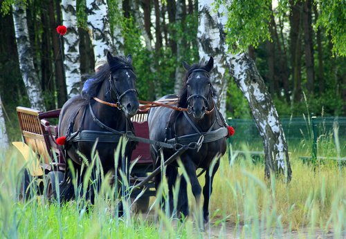 team  horses  chaise