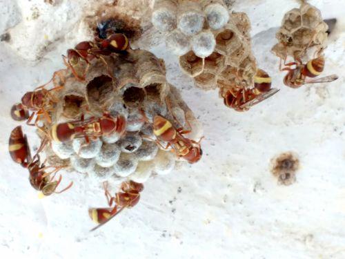 Team Work Beehive