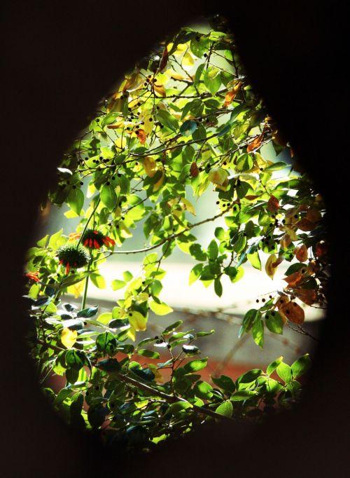 Teardrop Opening On Foliage