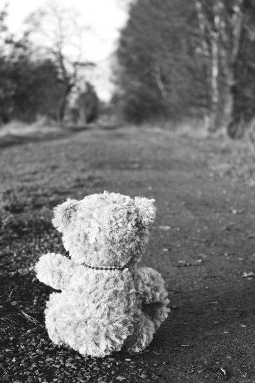 teddy teddy bear bear