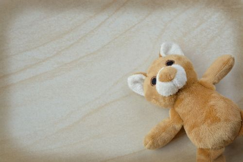teddy teddy bear small stuffed bear