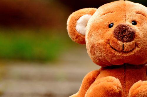 teddy cute animal