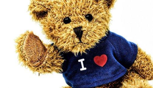 teddy  cute  soft toy