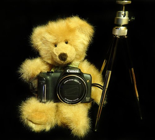 teddy  photography  toy
