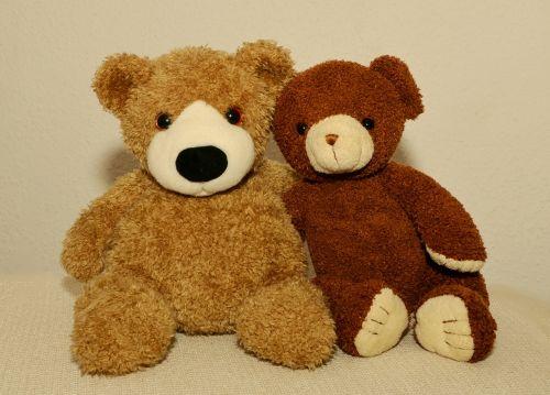 teddy teddy bear soft toy