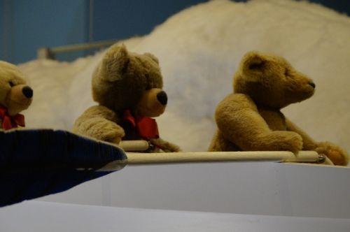 teddy teddies bear