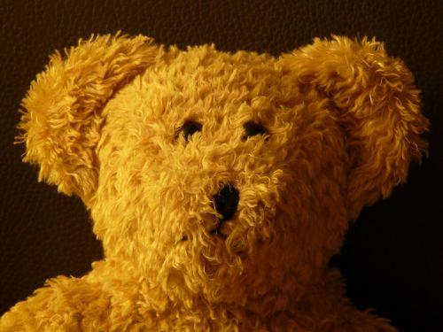 teddy bear soft fluffy