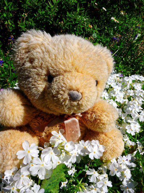 teddy bear teddy soft toy