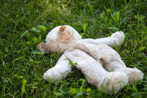teddy bear toys plush