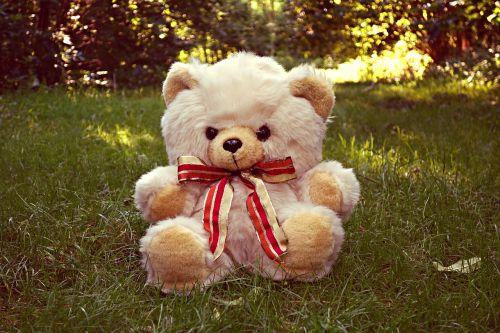 teddy bear bear teddy