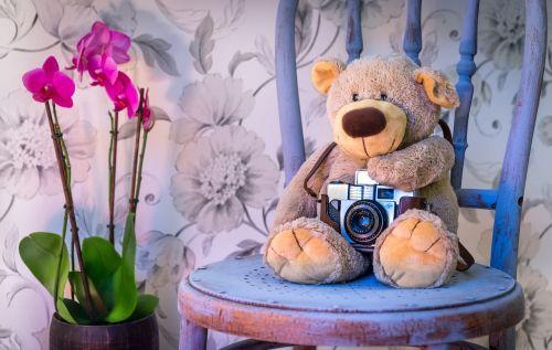 teddy bear camera orchids