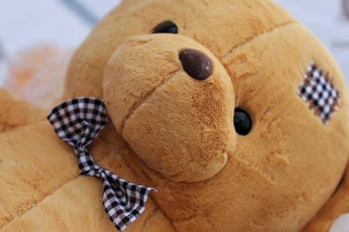 teddy bear  charming  bow