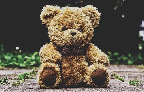 teddy bear  stuffed animal  teddy