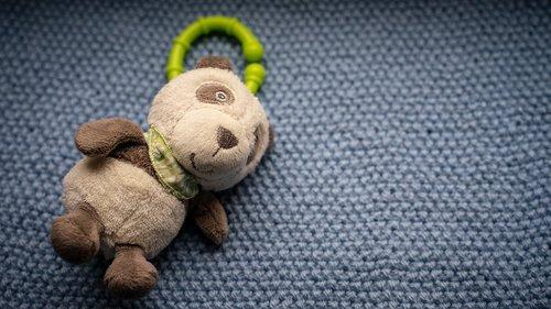 teddy bear  soft  bear
