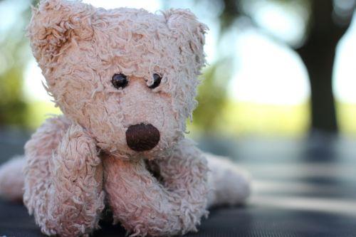 teddy bear stuffed animal cuddly