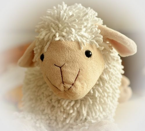 teddy bear sheep soft
