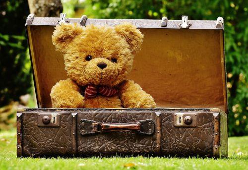 Teddy Bear In Luggage