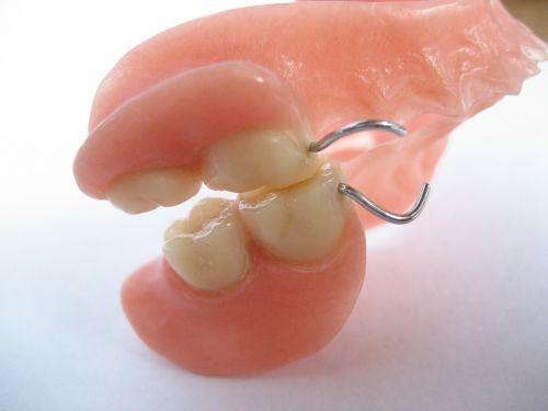 teeth tooth human