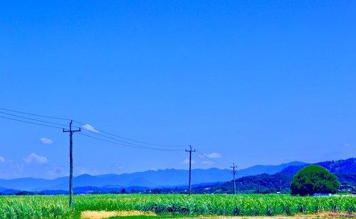 telegraph line  sugarcane  farmland
