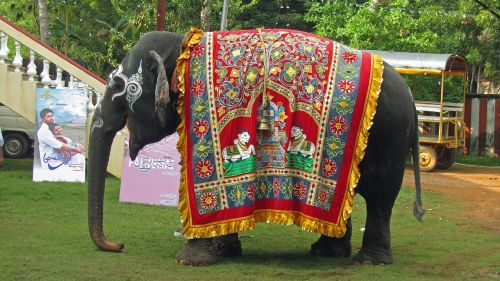 temple elephant india hinduism