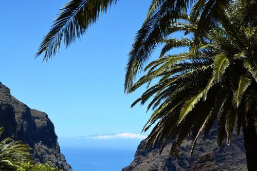 tenerife palm sea