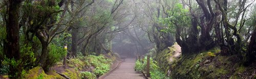 tenerife  anaga mountains  migratory path