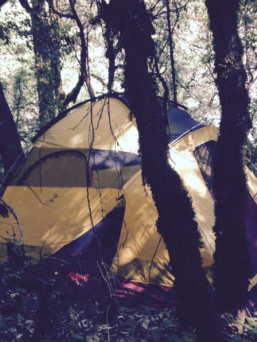 tent camping woods