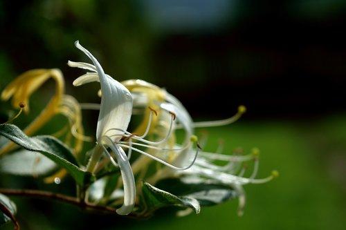 tentacles  stamens  flower