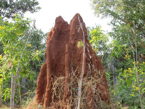 termite ant termite hill