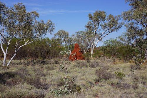 termittenhuegel australia outback