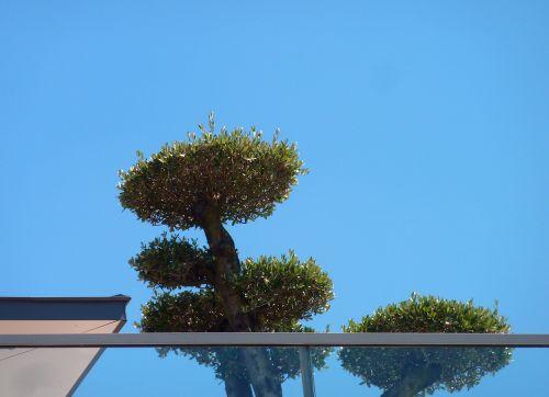 terrace roof terrace plant