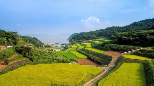 terraced fields japan the countryside