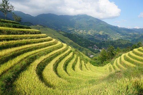 terraced fields  longji  dragon's back
