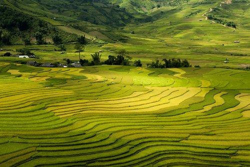 terraces  tay bac  vietnam